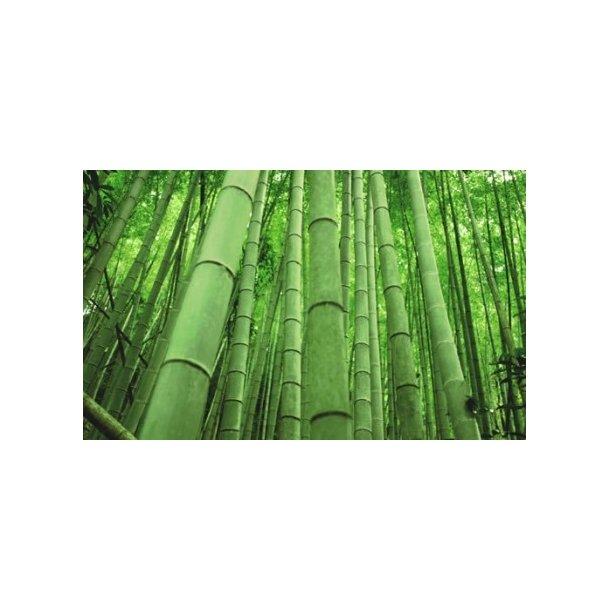 Bambusrør max 15 cm