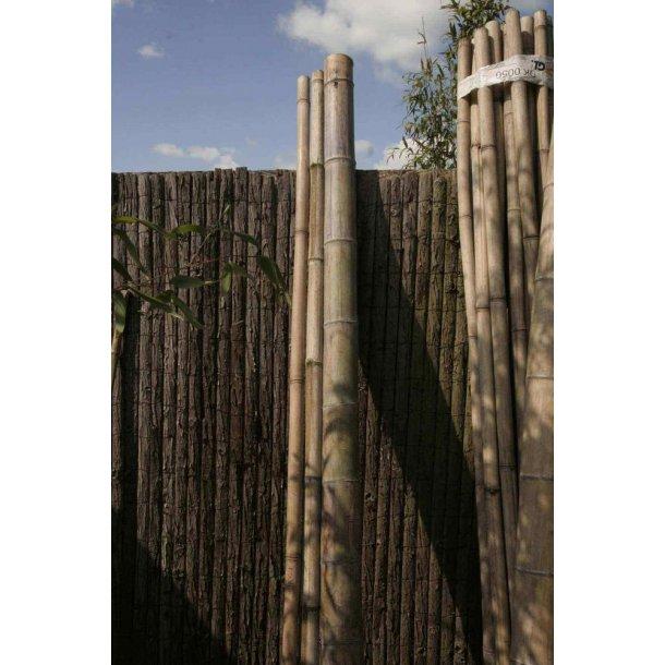 Bambusrør max dia. 5 cm